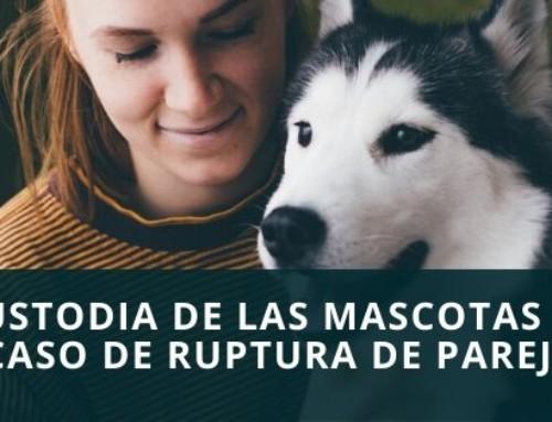 La custodia de las mascotas en casos de separación